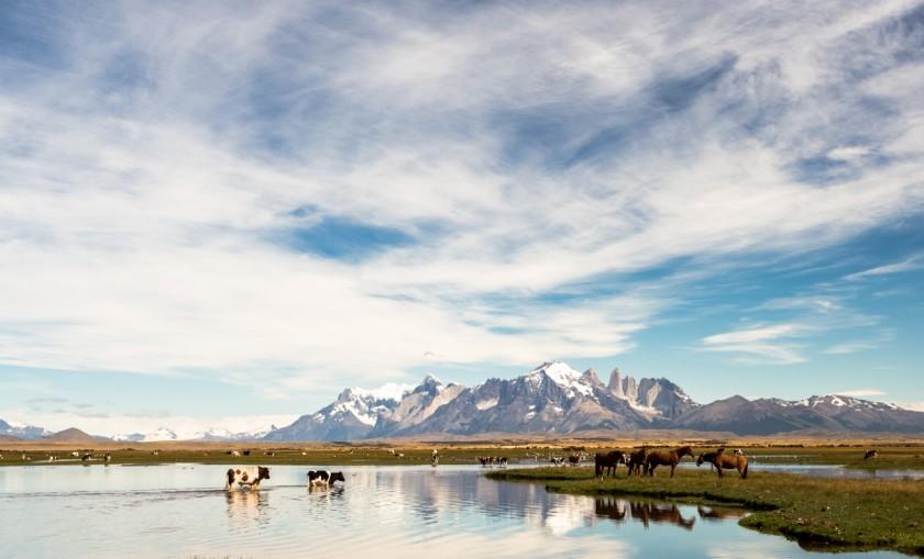 Fly Fishing Patagonia Chilena
